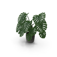 Monstera Deliciosa Plant In Pot PNG & PSD Images