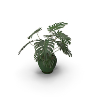 Monstera Deliciosa With Pot Green PNG & PSD Images