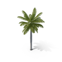 Royal Palm PNG & PSD Images