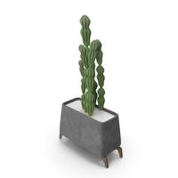 Cactus Jug PNG & PSD Images