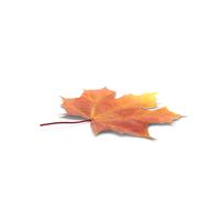 Autumn Maple Leaf PNG & PSD Images