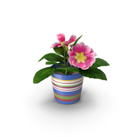 Flower in Pot PNG & PSD Images