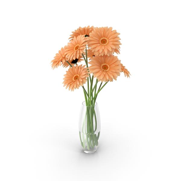 Flowers Gerbera PNG & PSD Images