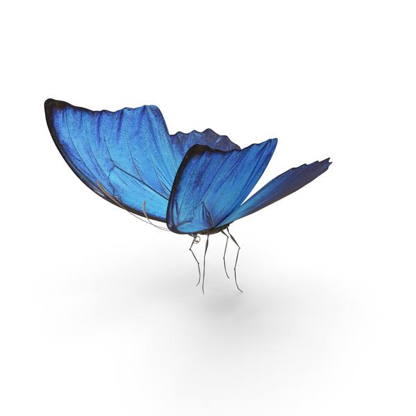 Blue Morpho PNG & PSD Images