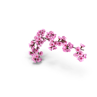 Sakura Tree Branch with Pink Flowers PNG & PSD Images