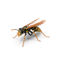Paper Wasp Standing Pose PNG & PSD Images
