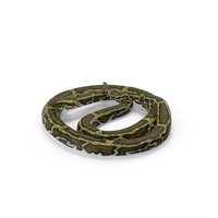 Green Python Snake Curled Pose PNG & PSD Images