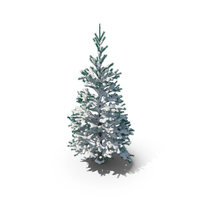 Snow Covered Conifer PNG & PSD Images