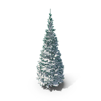 Conifer Covered in Snow PNG & PSD Images