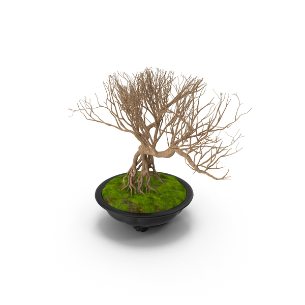 Bonsai Naked Tree in Pot Fur PNG & PSD Images