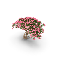 Miniature Bonsai Tree with Flowers PNG & PSD Images