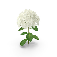 White Hydrangea Flower Branch PNG & PSD Images