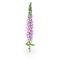 Digitalis Purpurea Plant PNG & PSD Images