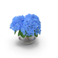 Hydrangea Macrophylla Nikko Blue in Glass Bowl PNG & PSD Images