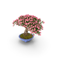 Miniature Green Bonsai Tree with Flowers in Pot PNG & PSD Images