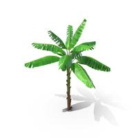 Tall Banana Tree PNG & PSD Images