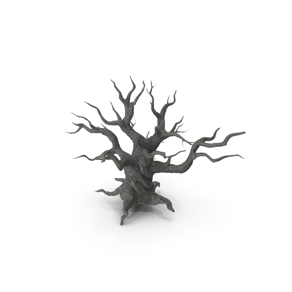 Spooky Old Twisted Tree PNG & PSD Images