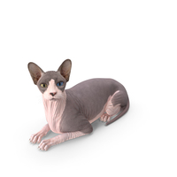 Bicolor Sphynx Cat Lying Pose PNG & PSD Images