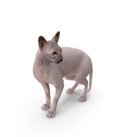 Dark Solid Color Sphynx Cat PNG & PSD Images