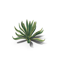 Agave Americana Century Plant PNG & PSD Images