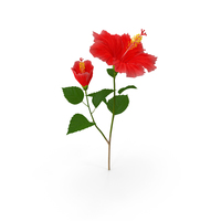 Hibiscus Branch with Flower Red PNG & PSD Images