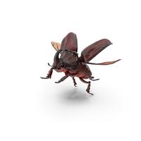 Rhinoceros Beetle Oryctes Nasicornis Flying PNG & PSD Images