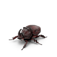 Rhinoceros Beetle Oryctes Nasicornis Standing with Fur PNG & PSD Images