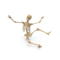 Real Human Female Skeleton Falling PNG & PSD Images
