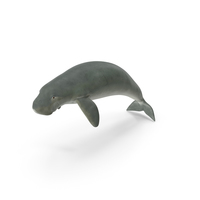 Dugong Swimming Pose PNG & PSD Images