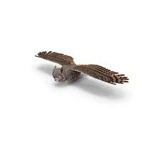Great Horned Owl Flying Pose PNG & PSD Images