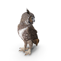 Great Horned Owl Standing Pose PNG & PSD Images