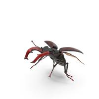 Lucanus Cervus Stag Beetle Flying PNG & PSD Images
