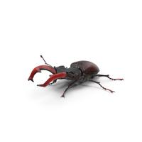 Lucanus Cervus Stag Beetle Walking Pose PNG & PSD Images