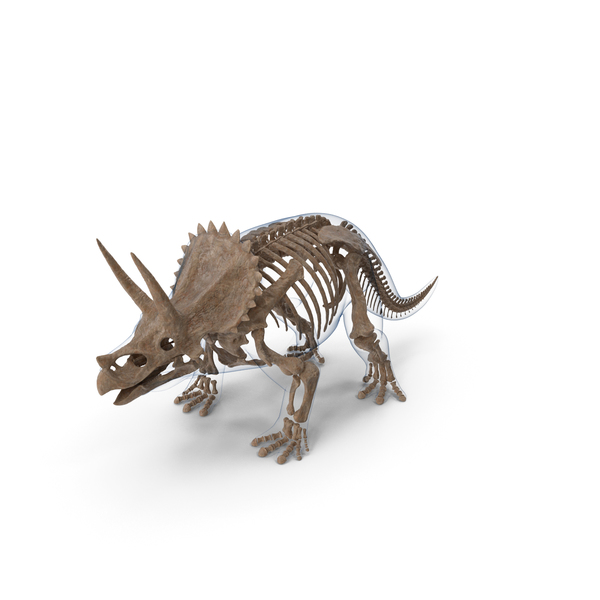 Triceratops Fossil Standing Pose with Transparent Skin PNG & PSD Images