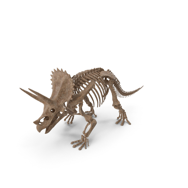 Triceratops Fossil Walking Pose PNG & PSD Images