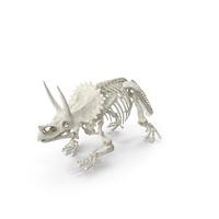 Triceratops Horridus Skeleton PNG & PSD Images