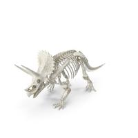 Triceratops Horridus Skeleton Walking Pose PNG & PSD Images