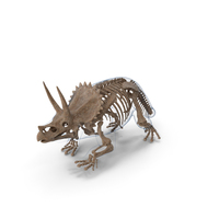 Triceratops Skeleton Fossil with Transparent Skin PNG & PSD Images