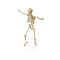 Real Human Female Skeleton PNG & PSD Images