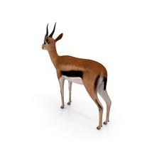 Gazelle PNG & PSD Images