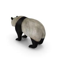 Giant Panda PNG & PSD Images