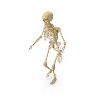 Real Human Female Skeleton Sneaking PNG & PSD Images