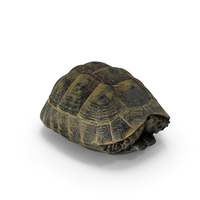 Turtle Shell PNG & PSD Images