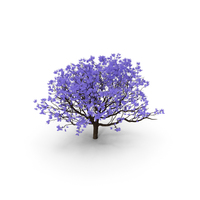 Blooming Jacaranda Tree without Leaves PNG & PSD Images