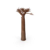 Naked Baobab PNG & PSD Images