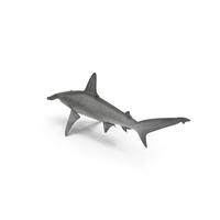 Hammerhead Shark PNG & PSD Images