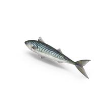 Blue Mackerel PNG & PSD Images