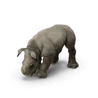 Baby Rhino Drinking Pose PNG & PSD Images