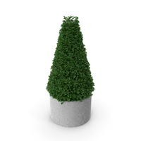 Buxus Pyramid PNG & PSD Images
