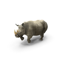 Rhino Adult Running Pose Fur PNG & PSD Images